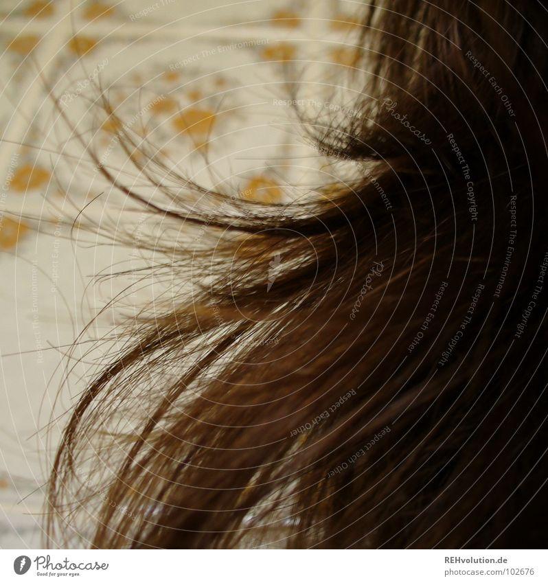 Haar-Ensemble 5 krause Haare zerzaust Physik Haare & Frisuren Wellen braun grün langhaarig gewaschen Friseur Schwimmbad Haarschnitt Bad Haarschopf trocken