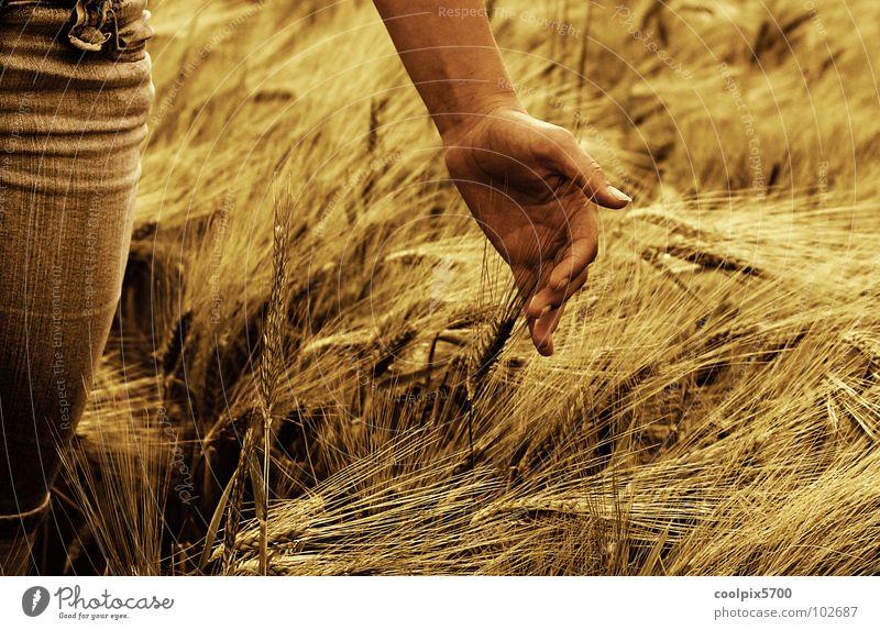 Unser täglich Brot Hand Sommer Freizeit & Hobby Landwirtschaft Landwirt Jahreszeiten Ernte Korn Kornfeld Weizen Ähren Streicheln Hafer