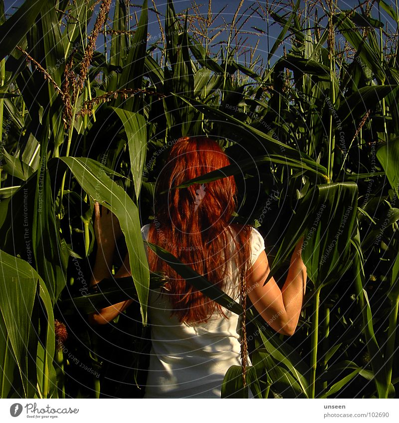 next to Frau Natur grün blau Pflanze rot Sommer Haare & Frisuren Feld Mais Maisfeld