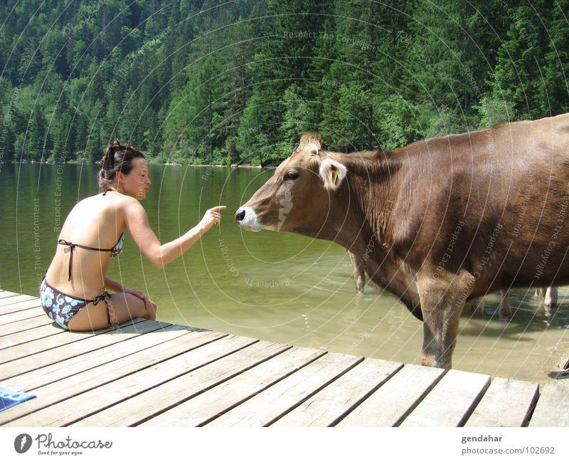 I mog di Frau Sommer Liebe See Berge u. Gebirge Alpen Bikini Kuh Österreich Säugetier Rind