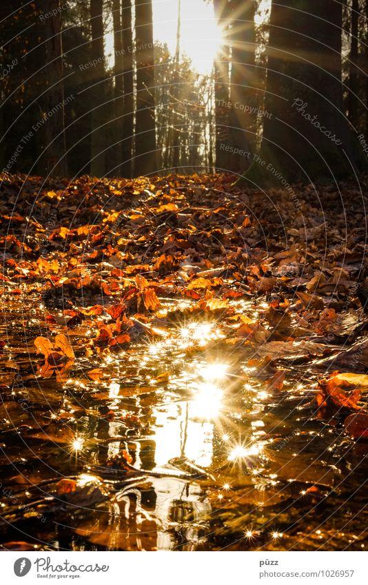 Glitzer Umwelt Natur Landschaft Pflanze Wasser Sonne Sonnenlicht Herbst Schönes Wetter Baum Blatt Wald natürlich braun gelb orange Einsamkeit
