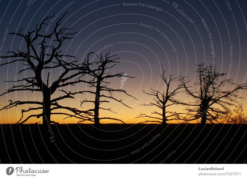 Baumsilhuetten im Sonnenaufgang Natur Pflanze Himmel Wolkenloser Himmel Nachthimmel Sonnenuntergang Sonnenlicht Winter Schönes Wetter Wald Schlucht Grand Canyon