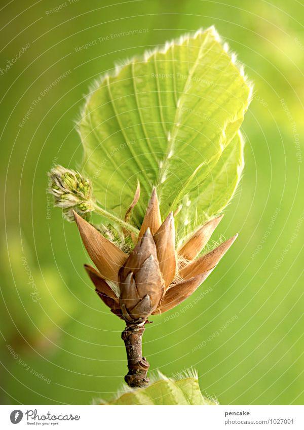 hoffnungsträger Natur schön grün Baum Blatt Wald Leben Frühling Glück Gesundheit authentisch Erfolg ästhetisch Schönes Wetter Urelemente Zeichen