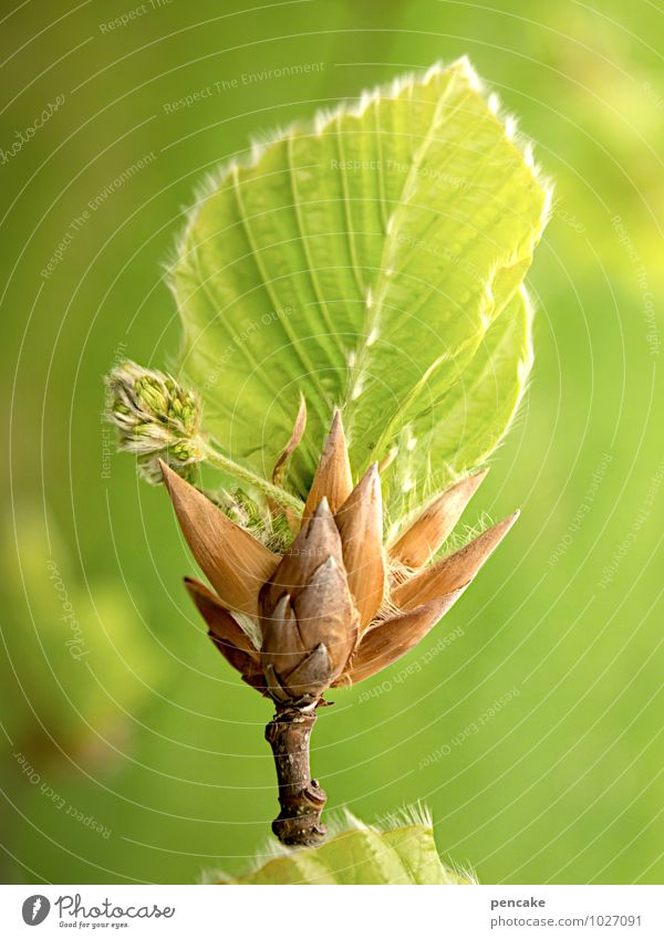 hoffnungsträger Natur Urelemente Frühling Schönes Wetter Baum Blatt Wald Zeichen atmen Duft authentisch Erfolg positiv saftig grün Glück Optimismus schön