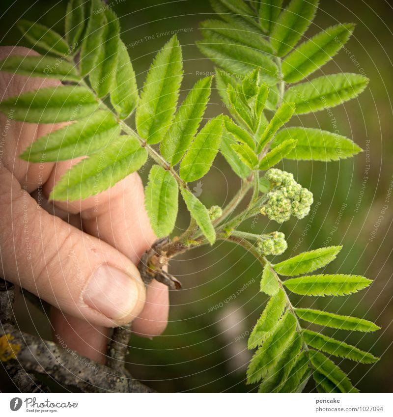 strüßje Natur Pflanze grün Baum Hand Blatt Freude Wald Leben Blüte Frühling Glück Wachstum Sträucher Beginn Finger