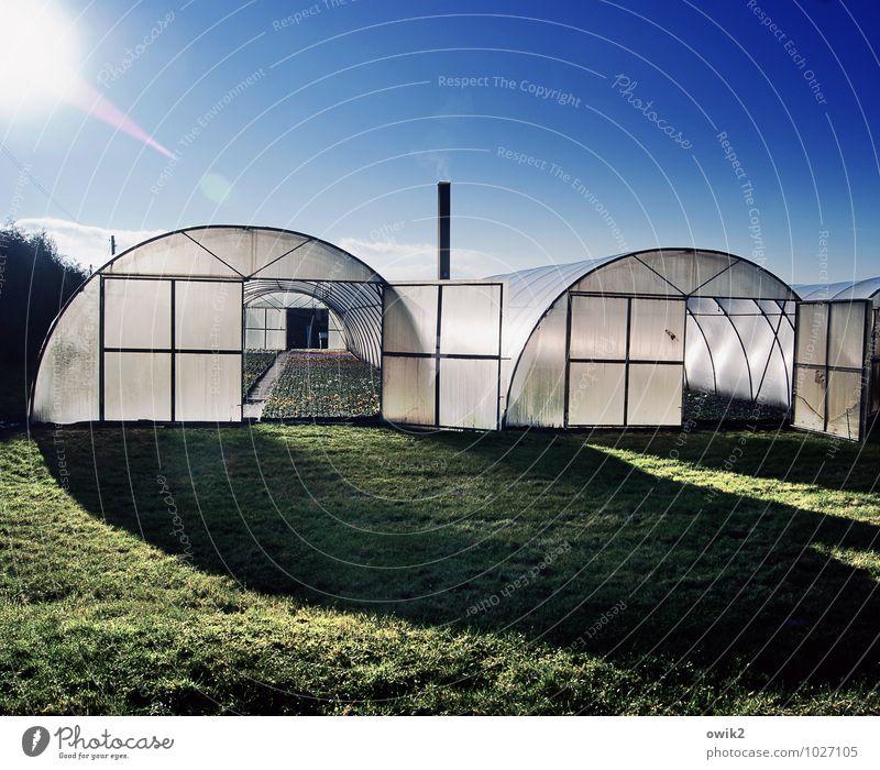 Unter Folie Umwelt Natur Landschaft Pflanze Wolkenloser Himmel Klima Schönes Wetter Gras Grünpflanze Nutzpflanze Bauwerk Gebäude Foliengewächshaus Gewächshaus