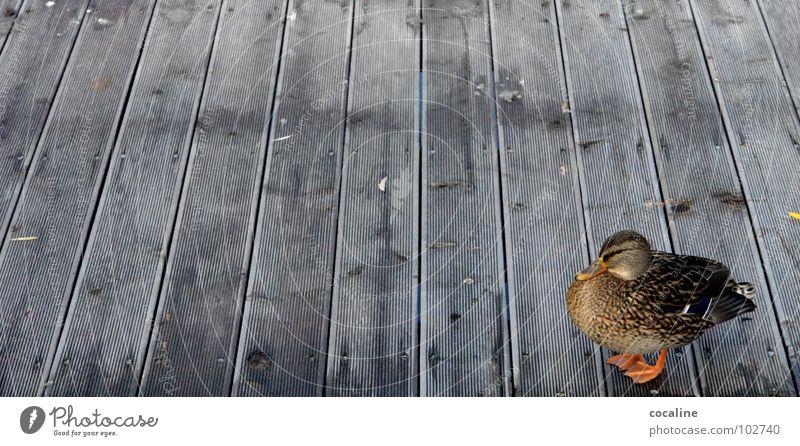 Nag Nag Tier Holz Vogel Steg Holzbrett Ente Schnabel