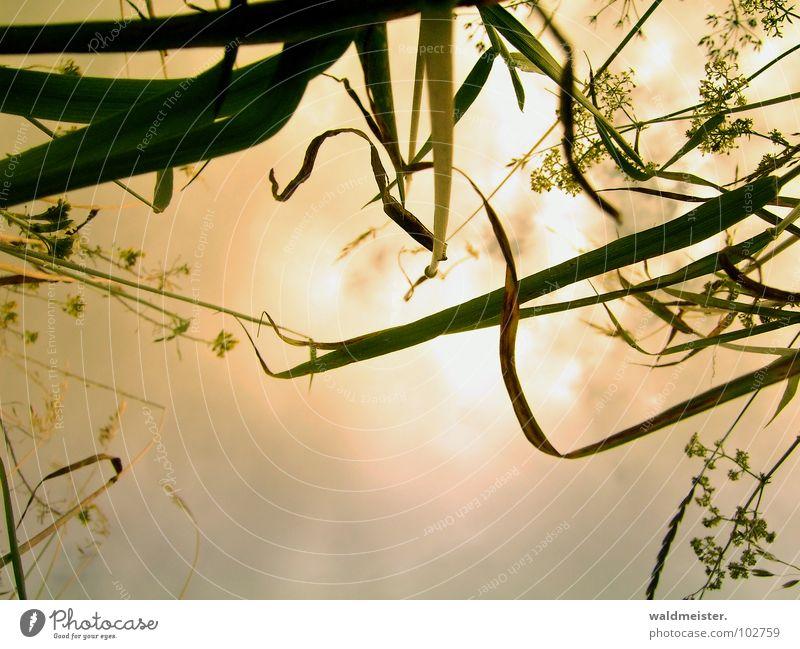 Käfertraum Natur Himmel Blume Wolken Wiese Gras träumen Romantik Surrealismus mystisch Märchen