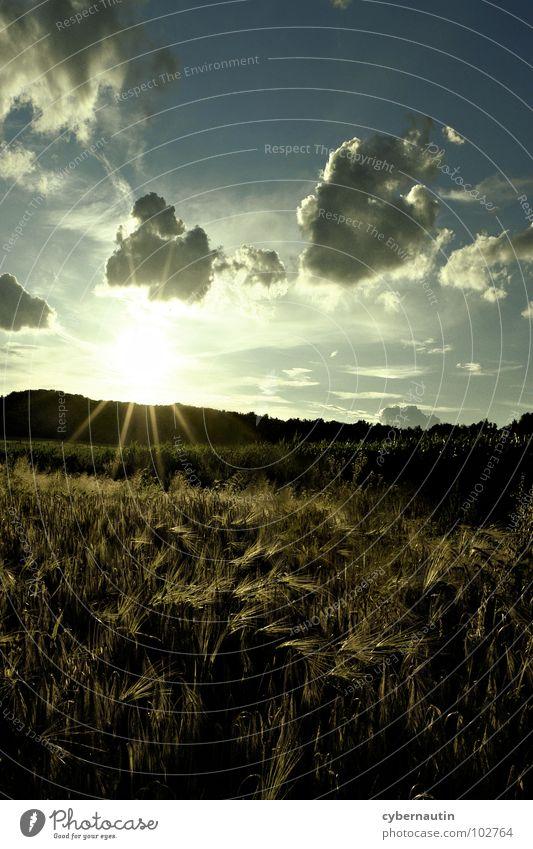 Feld-, Wald- und Wiesenfoto Sommer Sonnenuntergang Sonnenstrahlen Wolken Getreide Ernte Himmel Abend