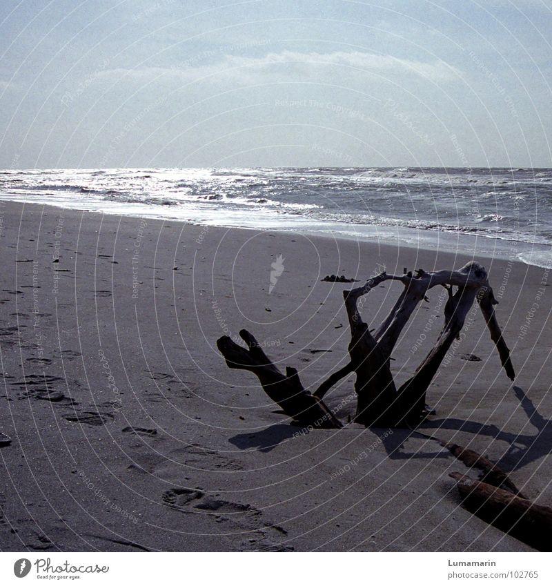Tiefer Schlaf Strand Küste Meer See Wellen Brandung Baum Holz untergehen verschütten leer kalt Jahreszeiten Herbst Winter schlafen tief Zeit Spuren