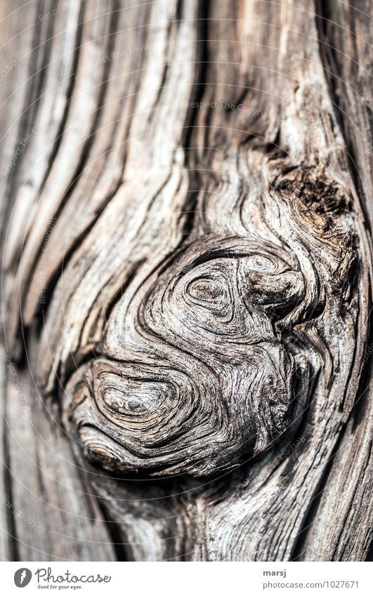 knorrig Natur Holzbrett alt dunkel authentisch einfach einzigartig natürlich braun durcheinander knotig eigenwillig Lebenslinie verwittert Patina undefinierbar