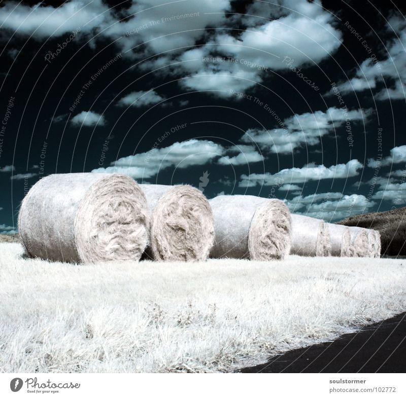 Stillgestanden! Infrarotaufnahme Farbinfrarot Schwarzfilter Wolken schwarz weiß Holzmehl Licht Gras Wiese Pflanze grün Baum Waldrand Wäldchen Heuballen Futter