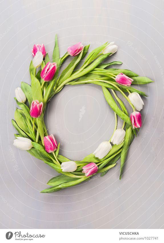 Frühlingskranz mit Tulpen Natur Pflanze grün weiß Sommer Blume Wand Innenarchitektur Frühling Stil Mauer grau Hintergrundbild Feste & Feiern Garten rosa