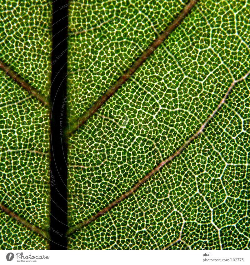 Das Blatt 16 Natur Baum grün blau Pflanze Leben Kraft Hintergrundbild Umwelt geschlossen Wein Sträucher nah Ast Landwirtschaft