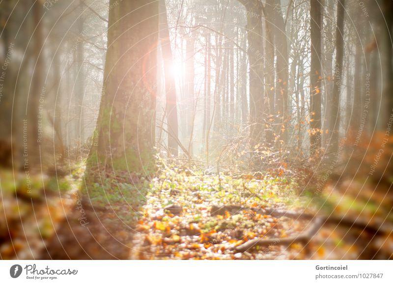 Waldsonne Natur Sonne Baum Blatt Umwelt Wärme Herbst hell Baumstamm Herbstlaub herbstlich Herbstwald