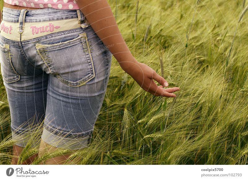 Unser täglich Brot Sommer Feld Freizeit & Hobby Landwirtschaft Ernte Kornfeld Weizen Stroh Ähren Mehl Getreide Kämpfer Gladiator