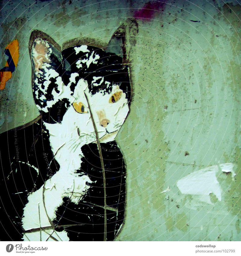 mauer moggy Stadt Wand Mauer Katze Graffiti Dekoration & Verzierung schäbig Säugetier Etikett Haustier Straßenkunst Chatten Wandmalereien verwildert