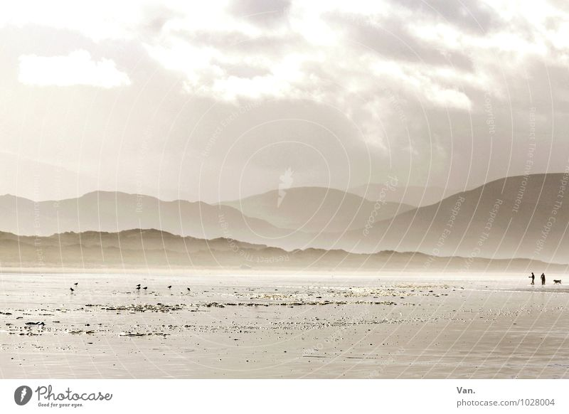 unendliche Weiten Mensch 2 Natur Landschaft Himmel Wolken Nebel Hügel Berge u. Gebirge Küste Strand Meer Republik Irland Hund 1 Tier Ferne frisch hell schön