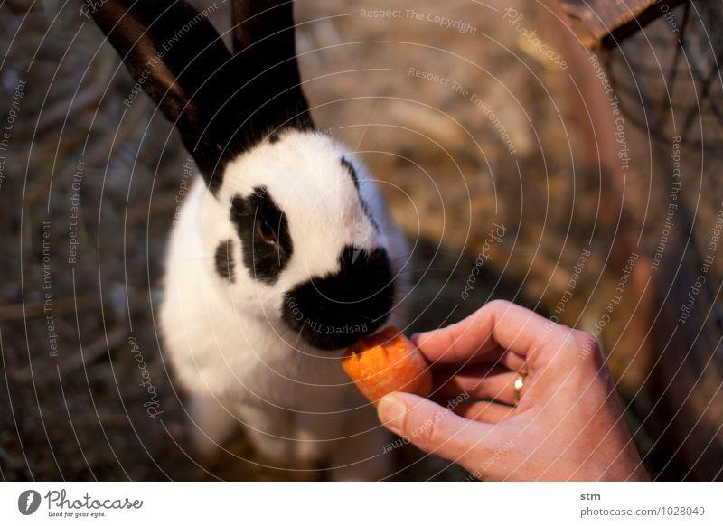nimmersatt 1 Freizeit & Hobby Spielen Ferien & Urlaub & Reisen Tier Haustier Nutztier Tiergesicht Fell Streichelzoo Hase & Kaninchen Hasenohren Schnauze füttern