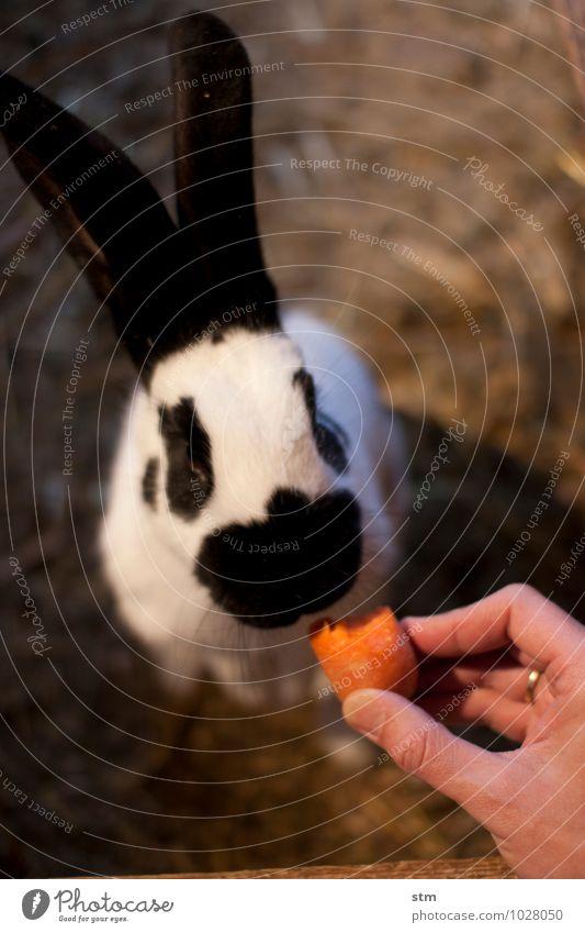 nimmersatt 2 Lebensmittel Gemüse Möhre Ernährung Essen Freizeit & Hobby Spielen Kinderspiel Tier Haustier Nutztier Tiergesicht Fell Pfote Streichelzoo