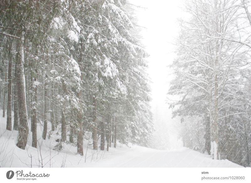 weiß auf weiß Natur Pflanze Baum Landschaft Winter Wald Umwelt Berge u. Gebirge Straße Schnee Wege & Pfade Schneefall Eis Freizeit & Hobby Wetter Wind
