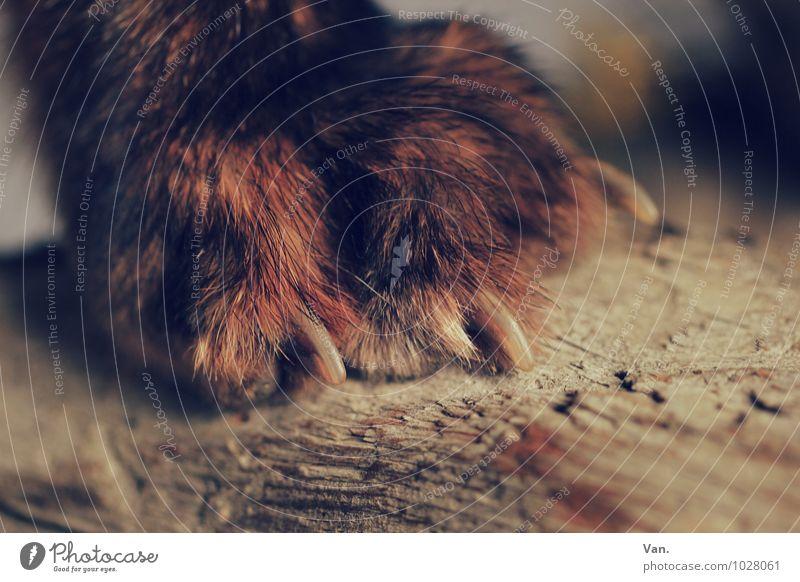 Pediküre Natur rot Tier Holz braun Fell Pfote Krallen Fuchs
