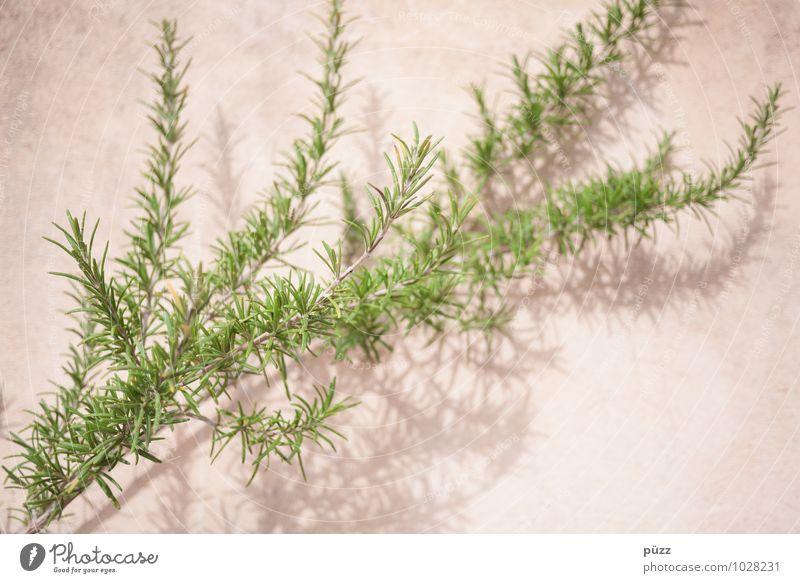 Kräuter Natur Pflanze grün Gesunde Ernährung natürlich Gesundheit Essen Stein Lebensmittel rosa Wachstum genießen Kräuter & Gewürze Appetit & Hunger Bioprodukte