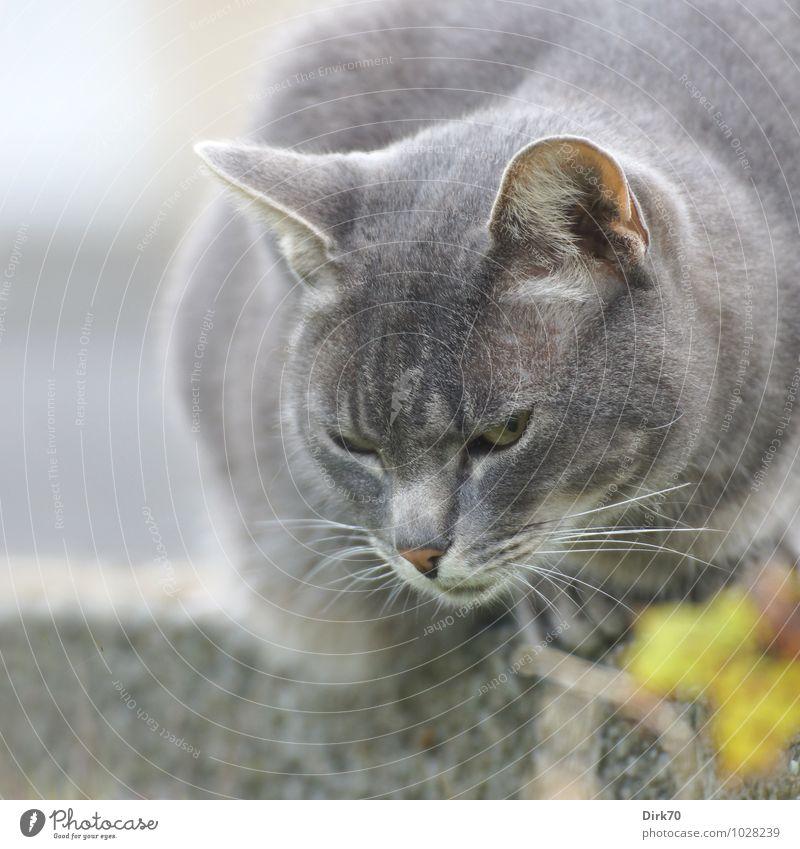 Beobachter Katze blau weiß Sommer Tier schwarz gelb Wand Mauer grau Garten wild sitzen frei beobachten bedrohlich