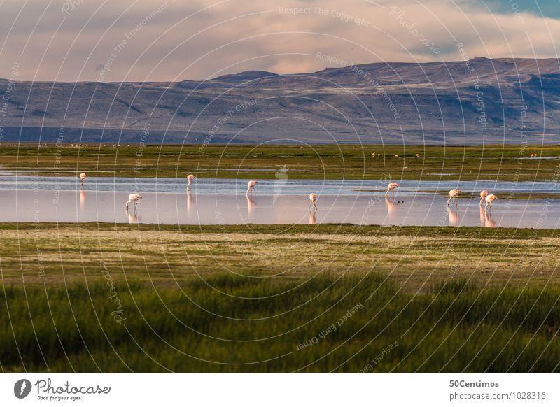 Eine Oase für Flamingos Natur Ferien & Urlaub & Reisen Sommer Landschaft ruhig Wolken Tier Ferne Berge u. Gebirge Frühling Herbst Wiese Freiheit See Park