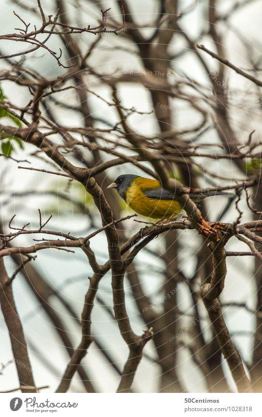 gelber Vogel - der Frühling kommt Umwelt Natur Wald Tier Wildtier 1 sitzen Freizeit & Hobby Neugier Pause Ferne ruhig Zweige u. Äste Baumkrone singen zwischen