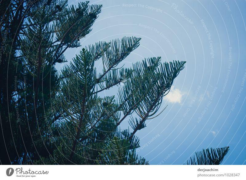 Schattenbaum Natur schön Sommer Baum Erholung Meer ruhig Wolken natürlich Holz Freizeit & Hobby Zufriedenheit fantastisch genießen Schönes Wetter einzigartig