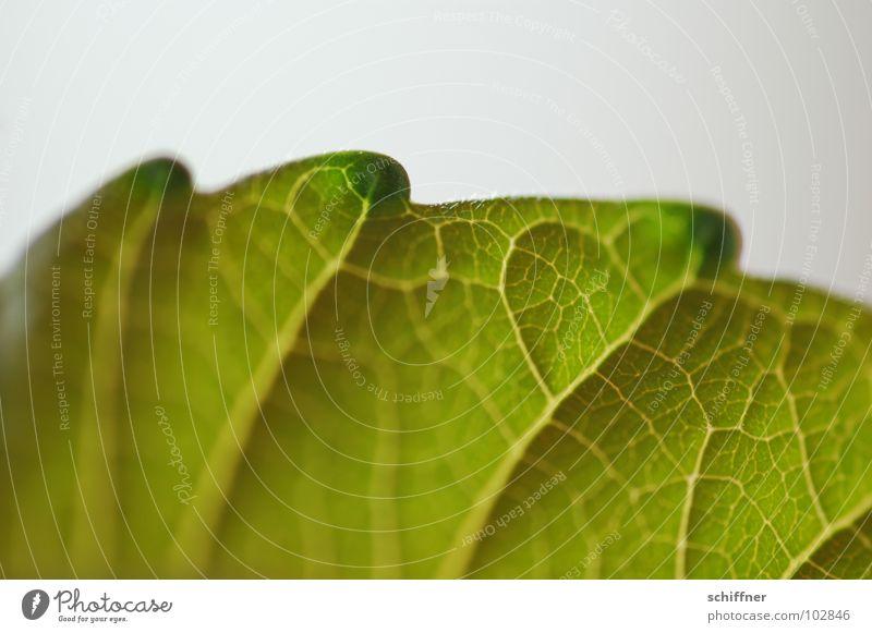 Auch ein Rücken kann entzücken... grün Pflanze Blatt Rücken Fluss Drache Bach Scheune Reptil Zacken