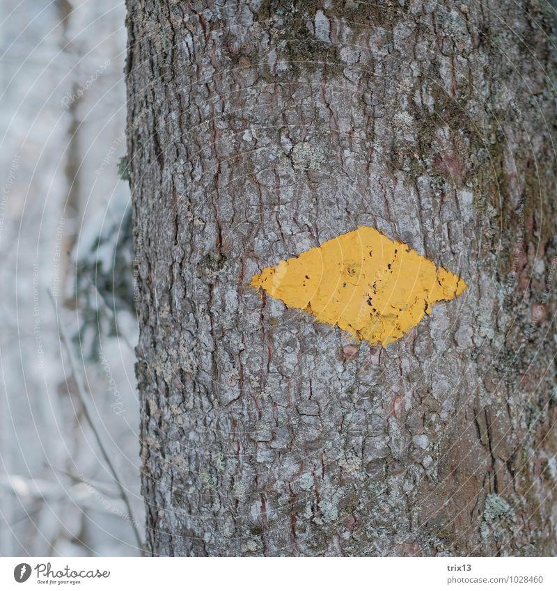 wegweisend Ausflug Winter wandern Natur Baum Moos Wald Holz gelb weiß Wegweiser Pfeil Farbfoto Außenaufnahme Nahaufnahme Detailaufnahme Strukturen & Formen