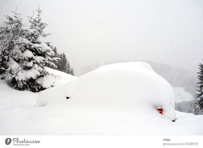 Winterschlaf Ferien & Urlaub & Reisen weiß Baum Berge u. Gebirge Schnee Lifestyle Schneefall Wetter PKW Klima Abenteuer Wandel & Veränderung Tanne Fahrzeug