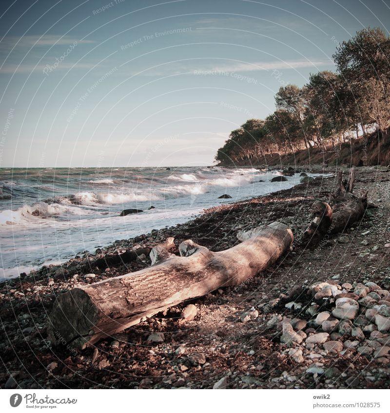 Fehmarn Umwelt Natur Landschaft Urelemente Wasser Himmel Horizont Klima Wetter Schönes Wetter Baum Wildpflanze Wellen Küste Strand Ostsee Insel Stein Holz Ferne