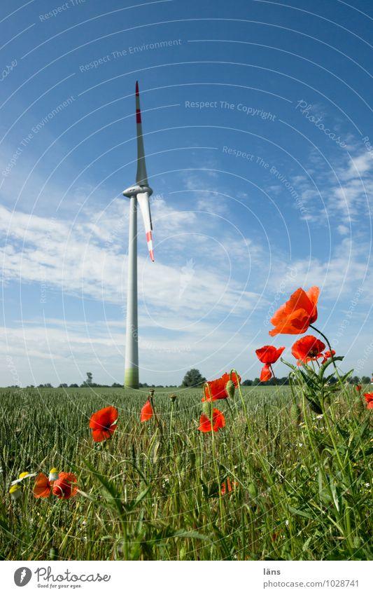 sommerfrische Himmel Natur Pflanze Sommer Blume Landschaft Wolken Umwelt Bewegung Blüte Energiewirtschaft Feld Kraft Technik & Technologie Zukunft