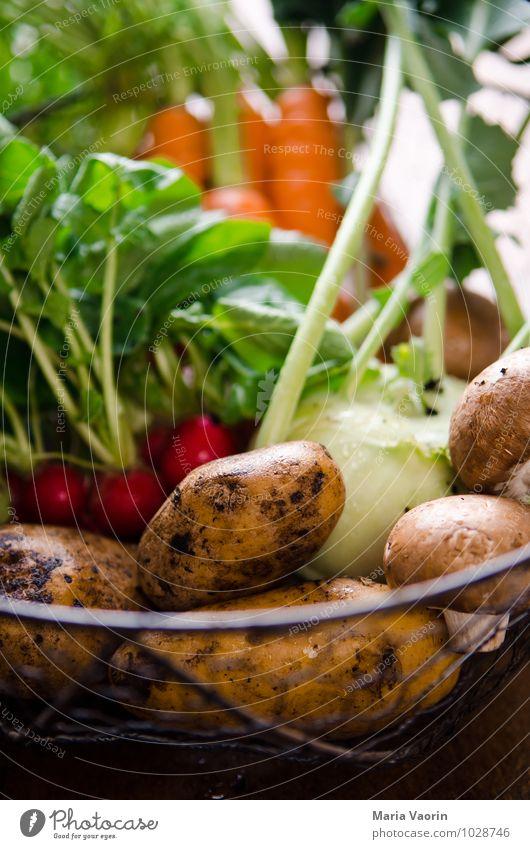 Gemüseallerlei 5 natürlich Gesundheit Essen Lebensmittel Ernährung Pilz Vegetarische Ernährung Möhre Kartoffeln Radieschen Champignons Gemüsegarten Kohlrabi