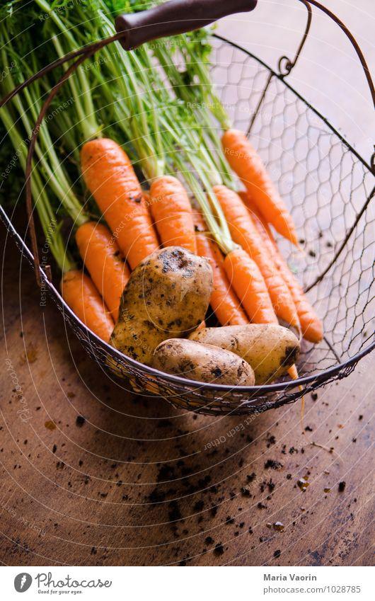 Gartengemüse Gesundheit Lebensmittel dreckig Erde frisch Ernährung Gemüse Bioprodukte Diät Vegetarische Ernährung Korb Nutzpflanze Möhre Kartoffeln Rohkost