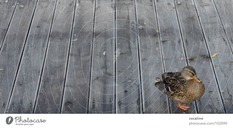 Alle meine Entchen ... Tier Holz Vogel Steg Holzbrett Ente Schnabel