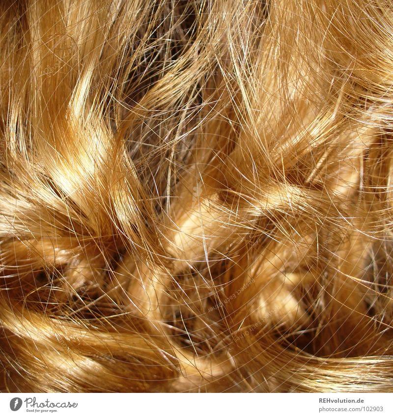 Zauberlöckchen ;-) Mensch Frau schön Wärme Haare & Frisuren Wellen blond Kraft gold Wildtier Spitze Engel Schwimmbad Bad Physik