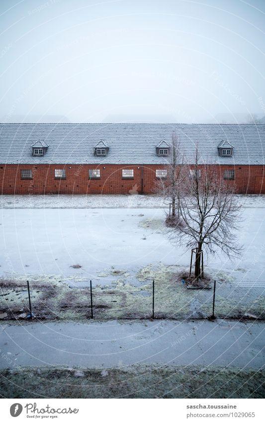 Täglicher Ausblick Stadt Baum Haus Winter kalt Wand Traurigkeit Herbst Schnee Mauer trist Nebel Glas frei Sehnsucht Frieden