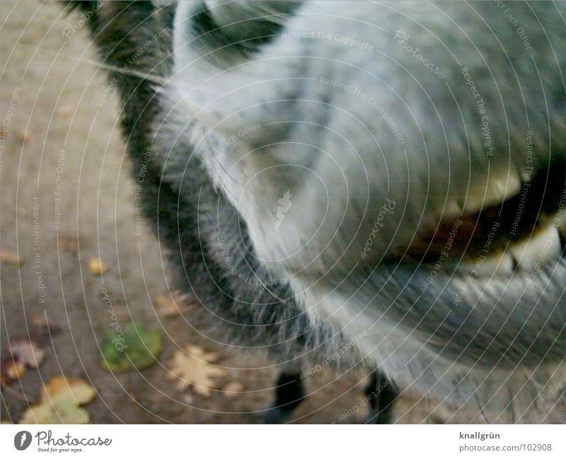 Perlweiss grau weiß Blatt braun Tier Lippen weich grell Fell Nasenloch Nüstern Säugetier Gebiss Esel