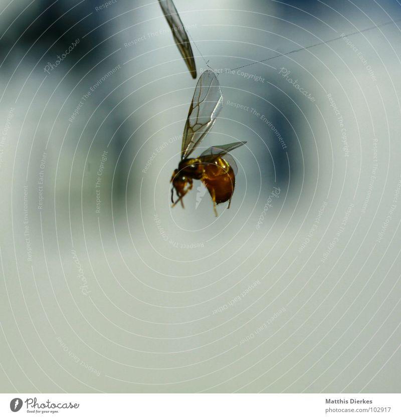 TOD Natur Sommer Tier Tod kaputt Flügel Vergänglichkeit Symbole & Metaphern Insekt Biene Zerstörung Fressen kämpfen verloren Gesetze und Verordnungen