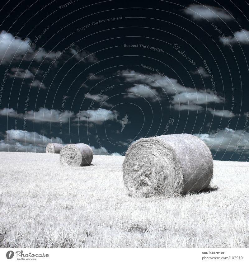 noch drei... Infrarotaufnahme Farbinfrarot Schwarzfilter Wolken schwarz weiß Holzmehl Gras Wiese Pflanze grün Baum Waldrand Wäldchen Heuballen Futter rund