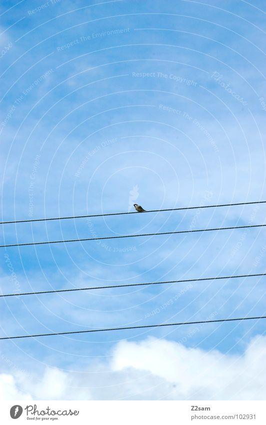 natürlich einfach Natur Himmel blau Wolken Tier Zufriedenheit Vogel fliegen Seil Kabel einfach Leitung graphisch