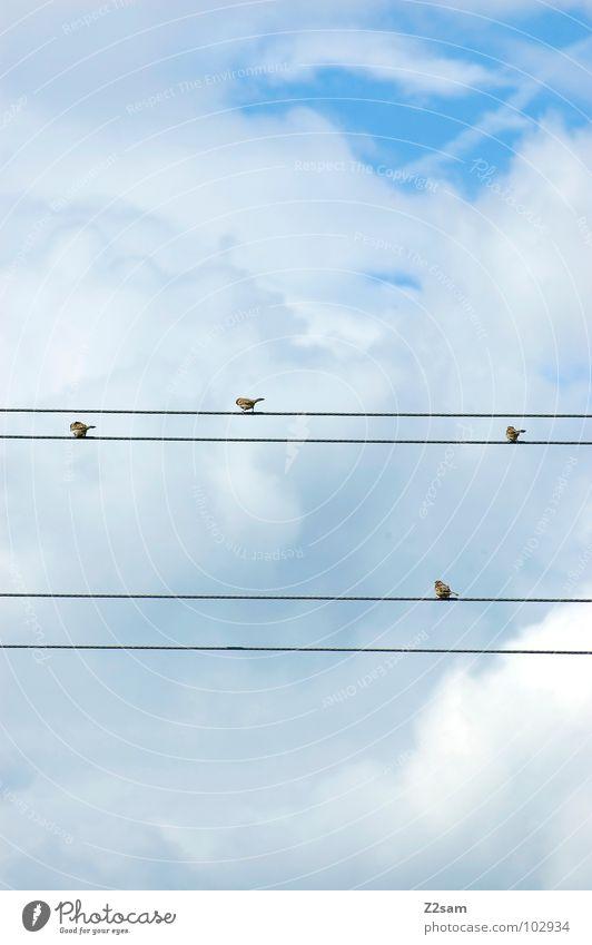 abflacken Natur Himmel blau Wolken Tier Zufriedenheit Vogel fliegen Seil mehrere Kabel einfach 4 Leitung graphisch