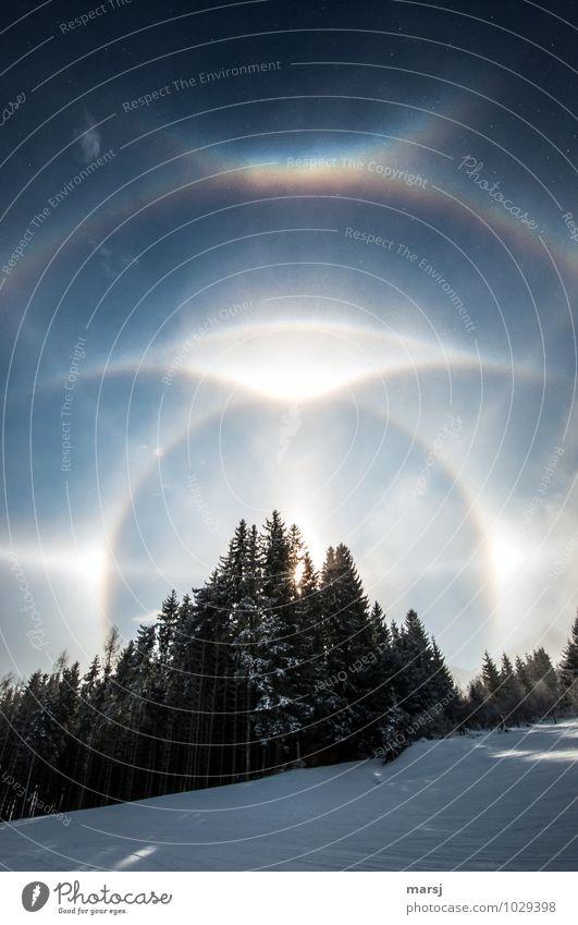 Das Glitzern und Glänzen der Eiskristalle Natur Landschaft Himmel Wolkenloser Himmel Winter Schönes Wetter Frost Schnee Wald Zirkumzenitalbogen glänzend