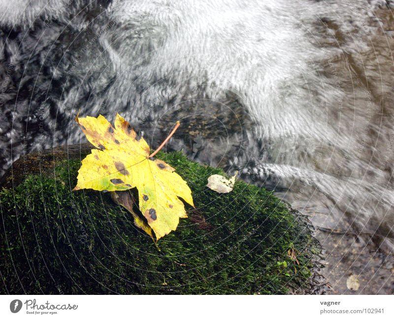 Herbst Blatt gelb Bach Wildbach mehrfarbig Langzeitbelichtung Fluss Wasser Stein Herbstlaune