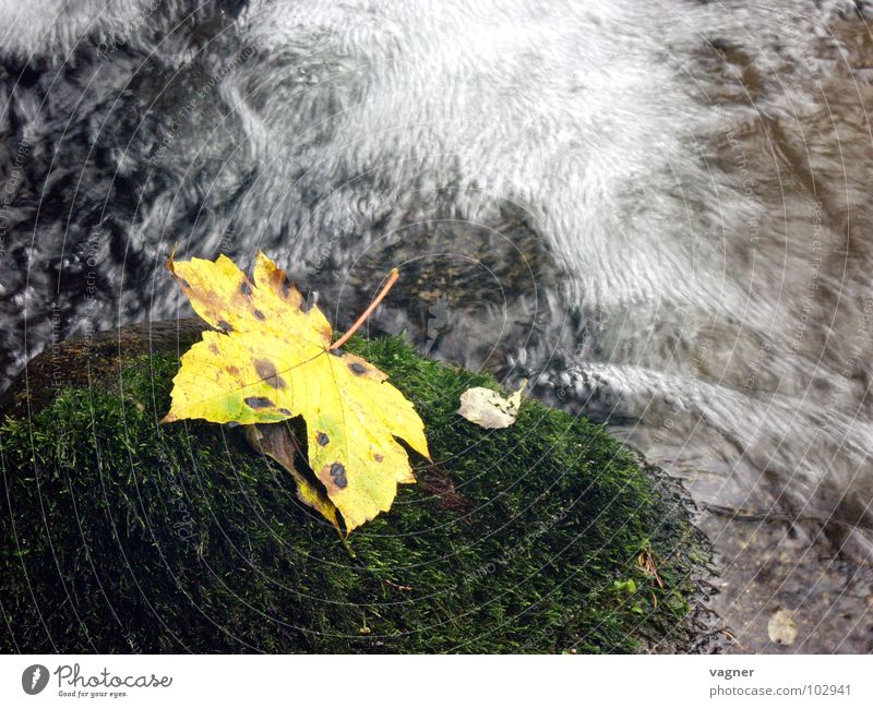 Herbst Wasser Blatt gelb Stein Fluss Bach Wildbach