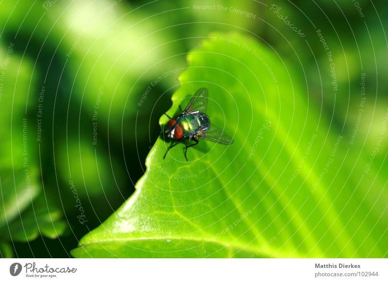 STARTBAHN Natur grün Baum Sommer Tier Blatt klein fliegen warten Fliege Beginn Flügel Pause Reinigen Symbole & Metaphern Lebewesen